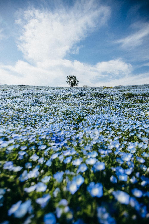 blue flower field under white clouds during daytime