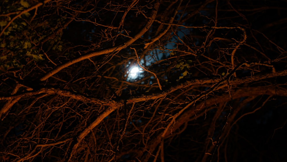 brown tree branches with blue and white light