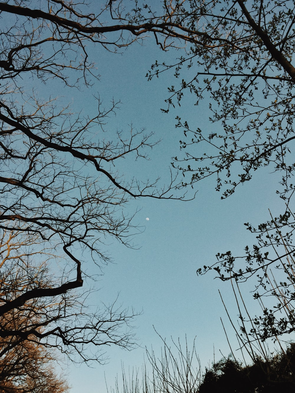 low angle photography of leafless tree under blue sky during daytime