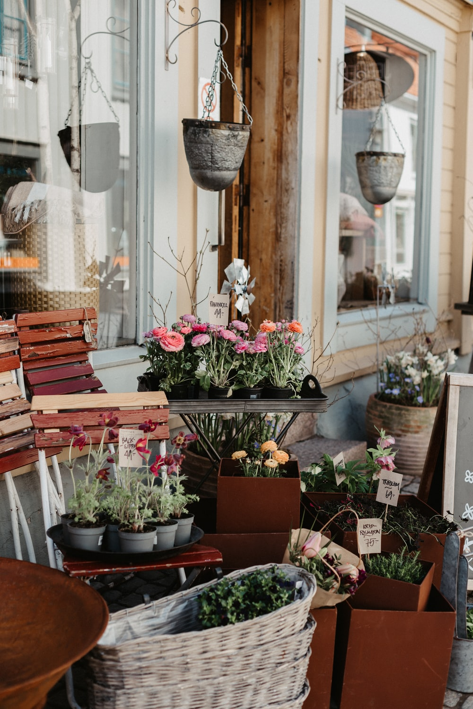 brown wooden bench near flowers