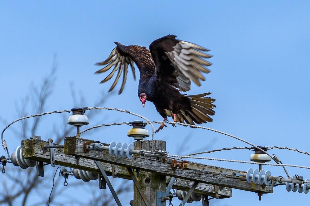 brown bird on gray metal fence during daytime