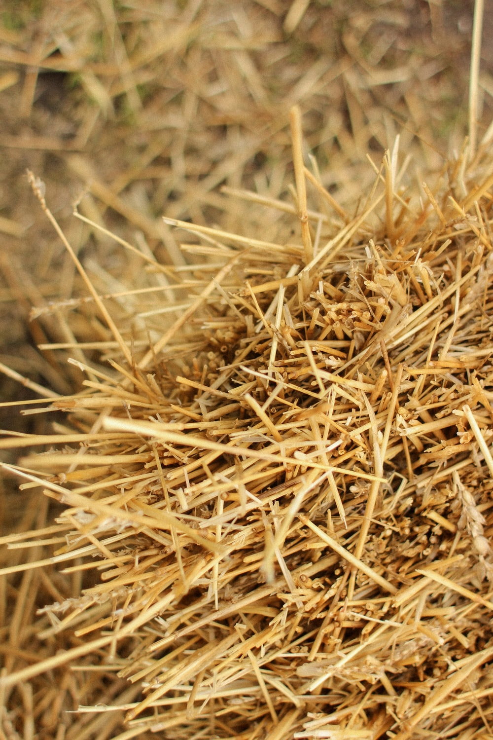 brown dried grass in close up photography