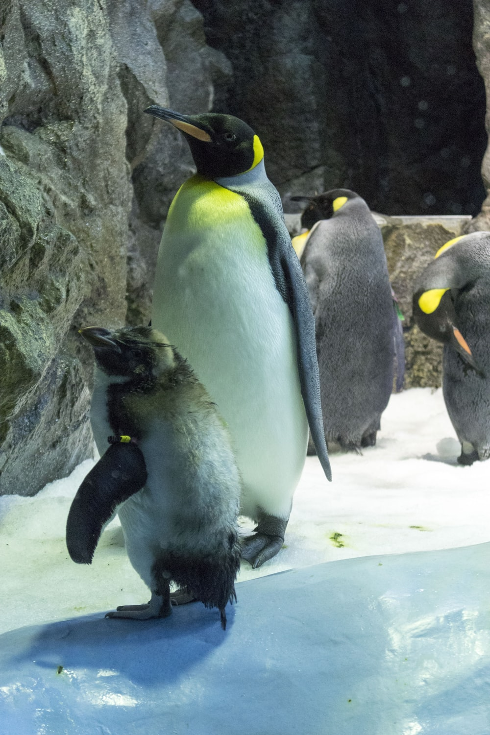 penguins on snow covered ground during daytime