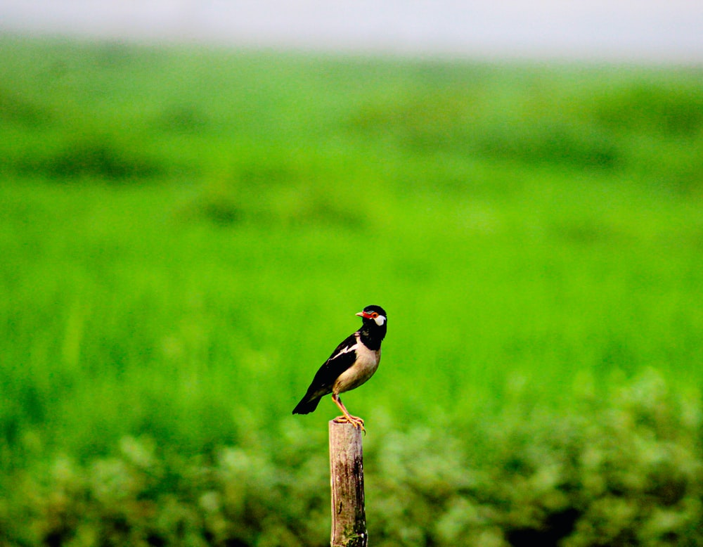 black and yellow bird on brown wooden post during daytime
