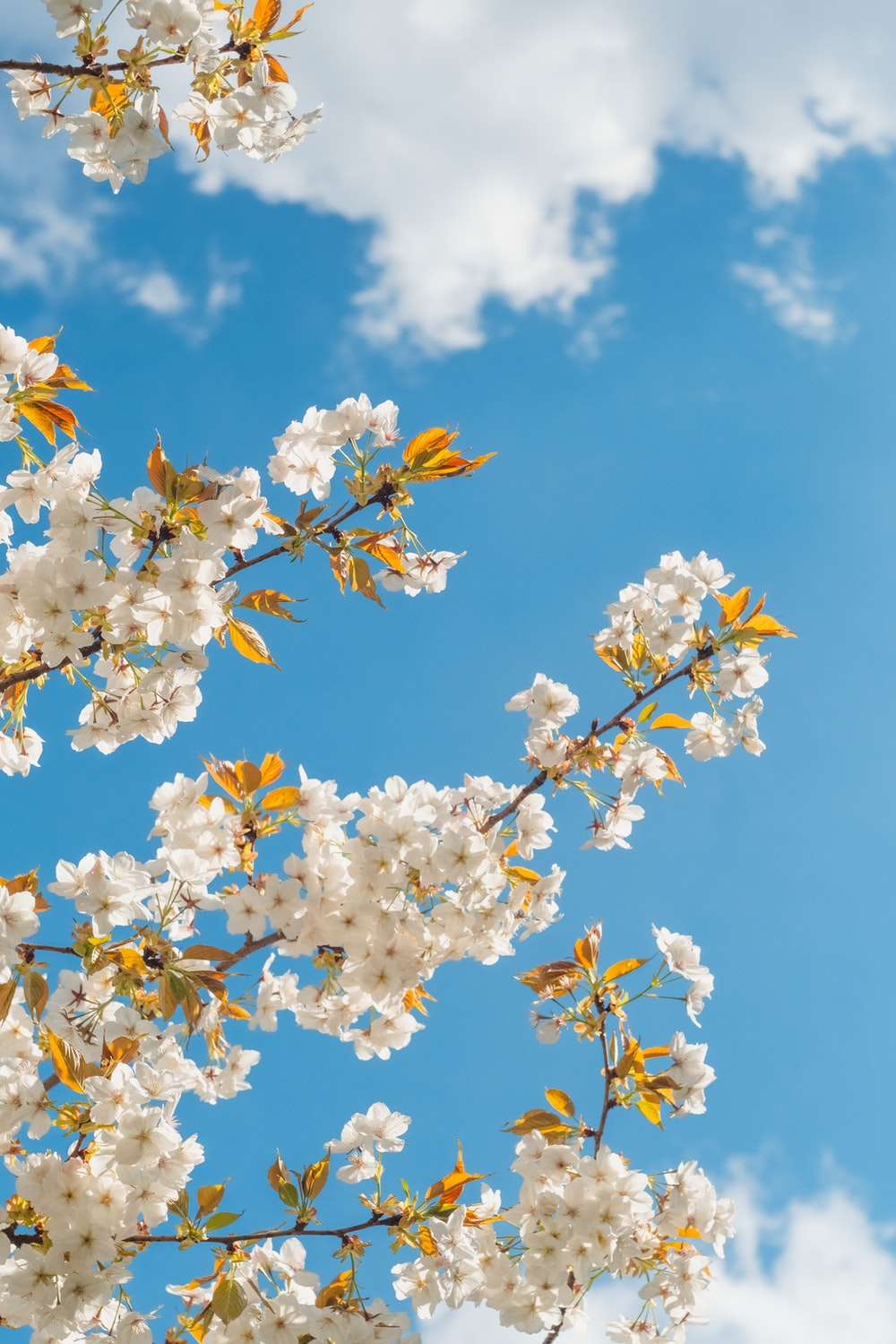 white and yellow flower under blue sky during daytime