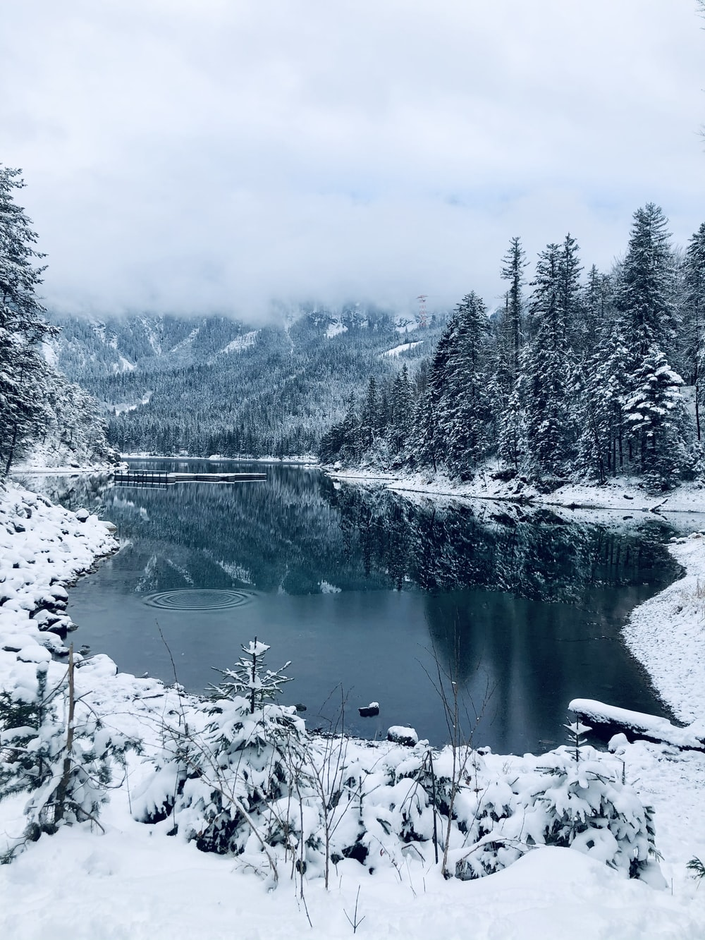 snow covered trees and lake