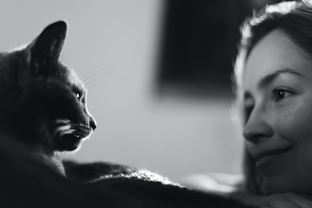 cat on bed in grayscale photography