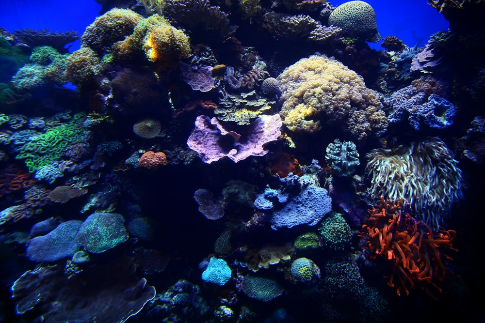 coral reef in fish tank