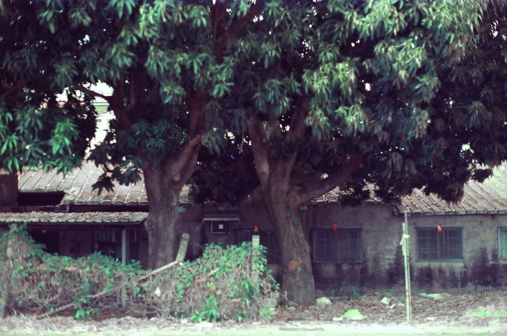 green tree near brown wooden fence