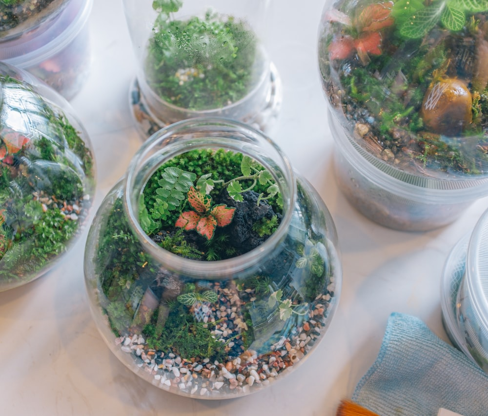 green and white plant in clear glass jars