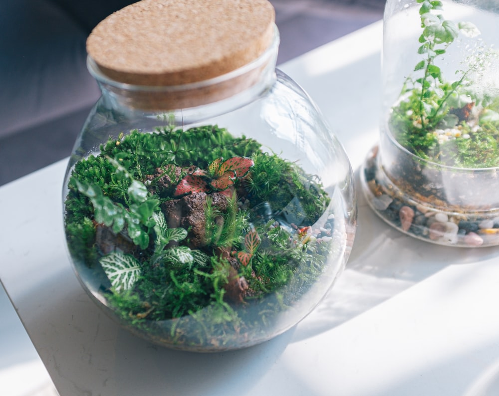 green and brown vegetable in clear glass jar