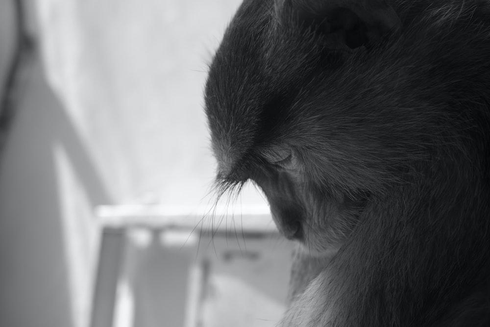 monkey on window in grayscale photography