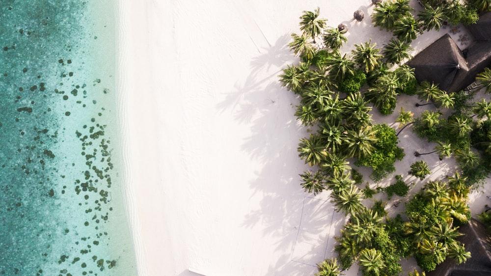 green plant on white sand