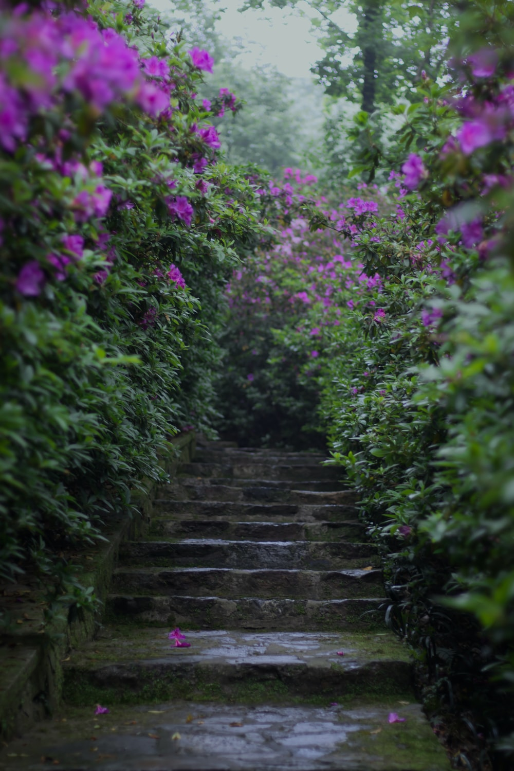 purple flower petals on stairs