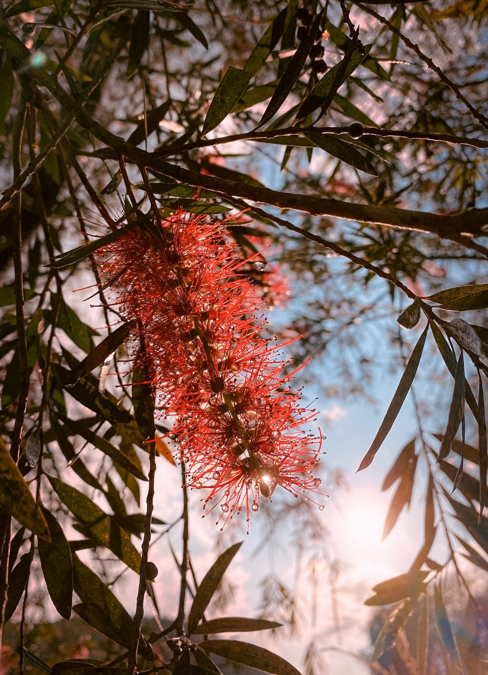 red flower on brown tree branch during daytime