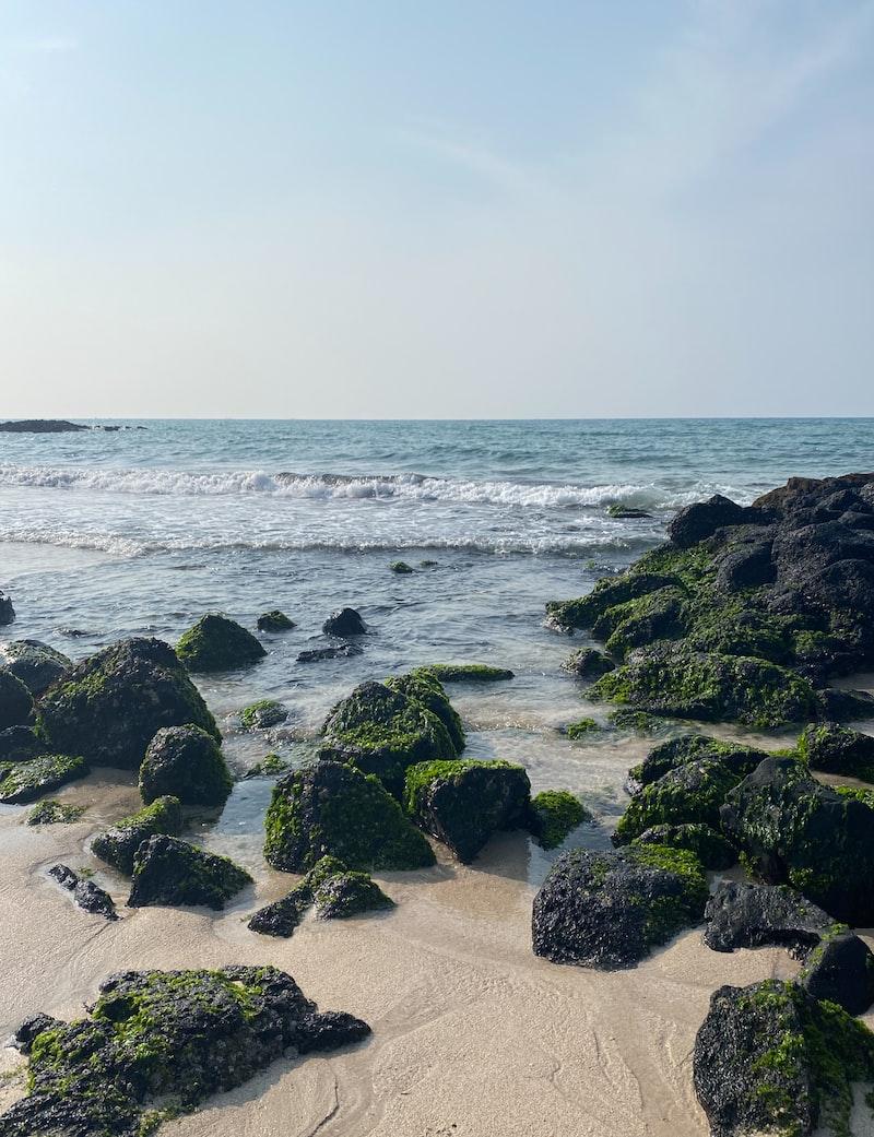 可憐的藻礁