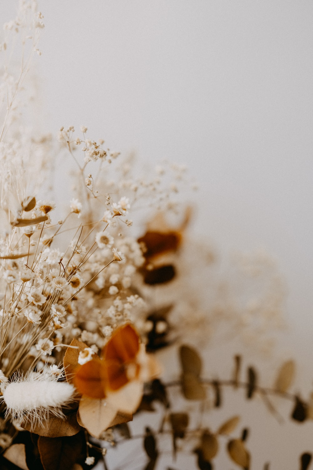 white flower buds in close up photography