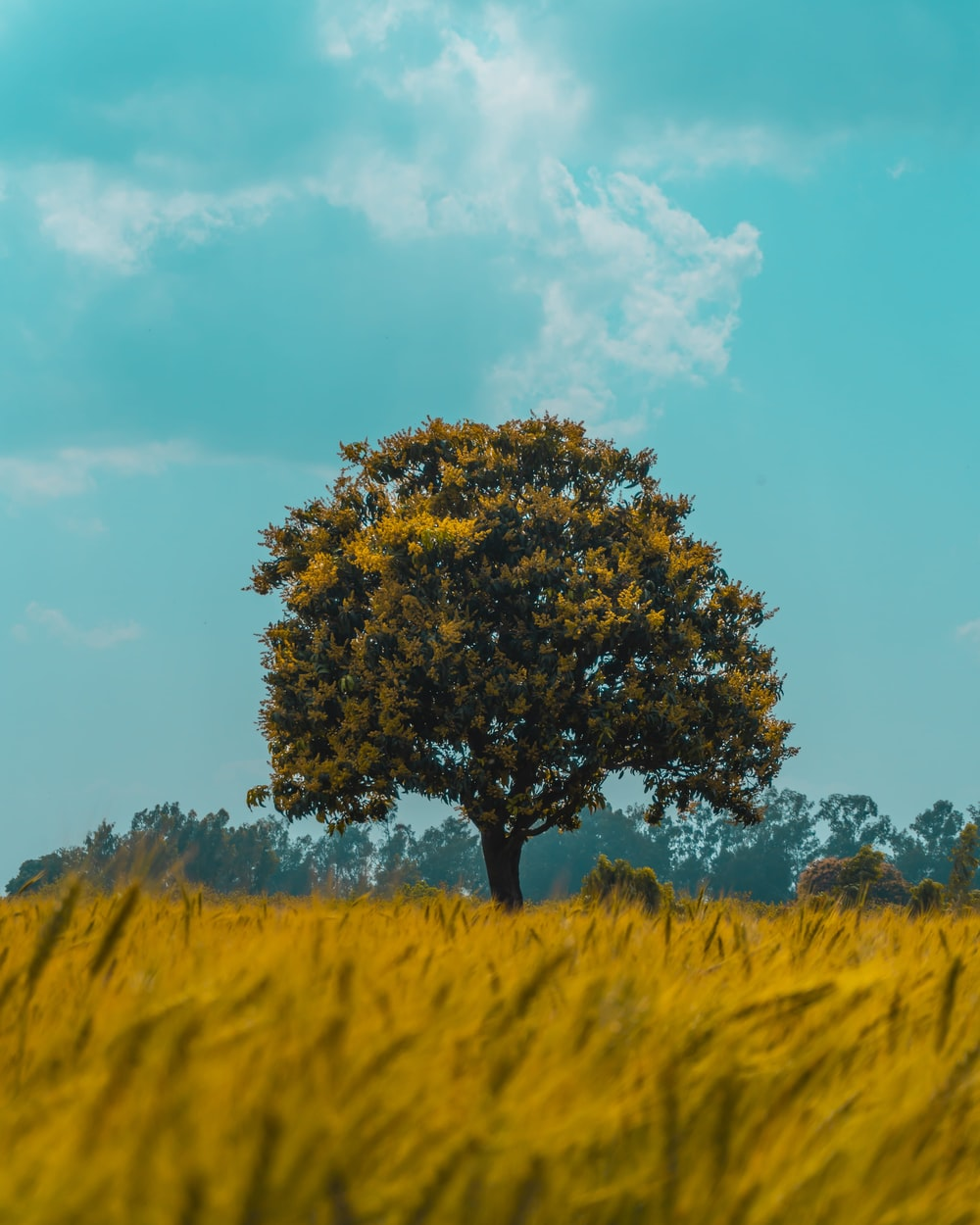green tree on yellow grass field under blue sky during daytime