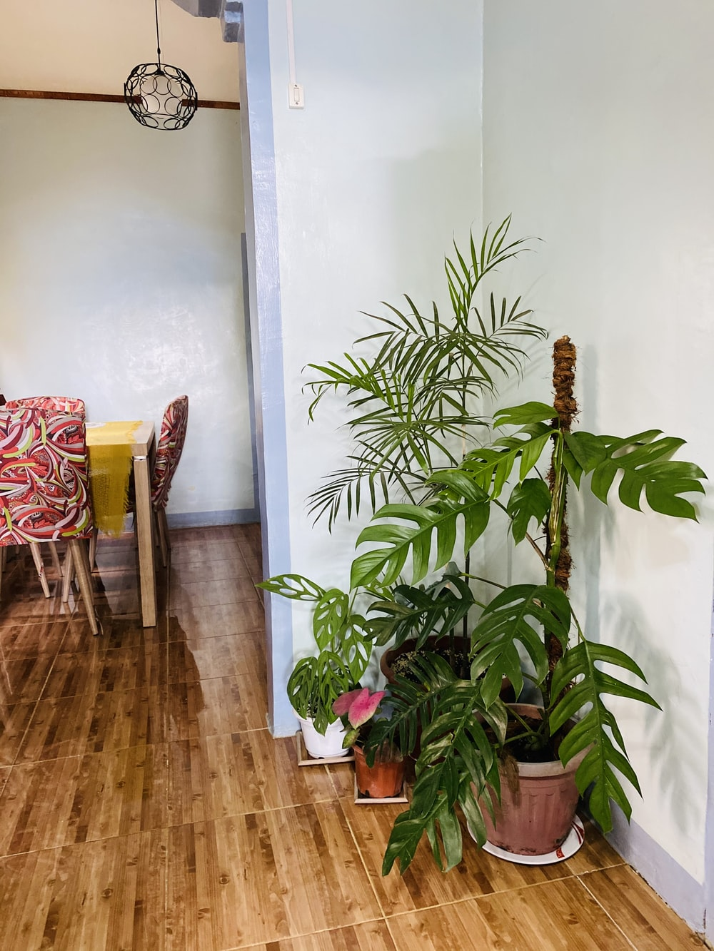 green indoor plant beside red and white chair