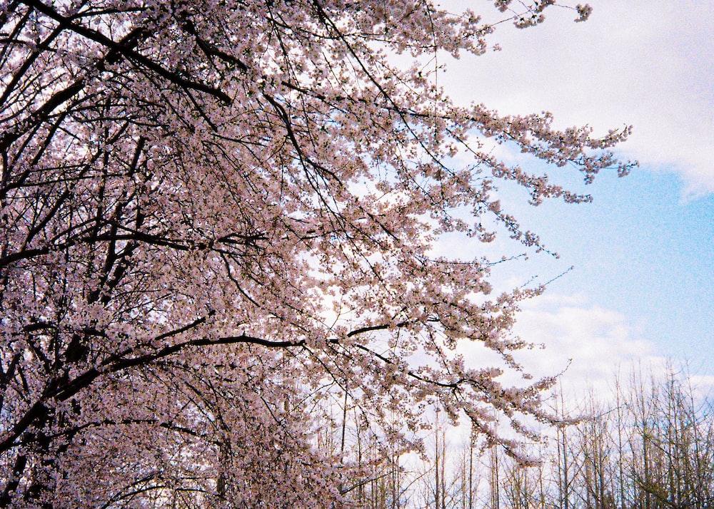 white leaf trees during daytime
