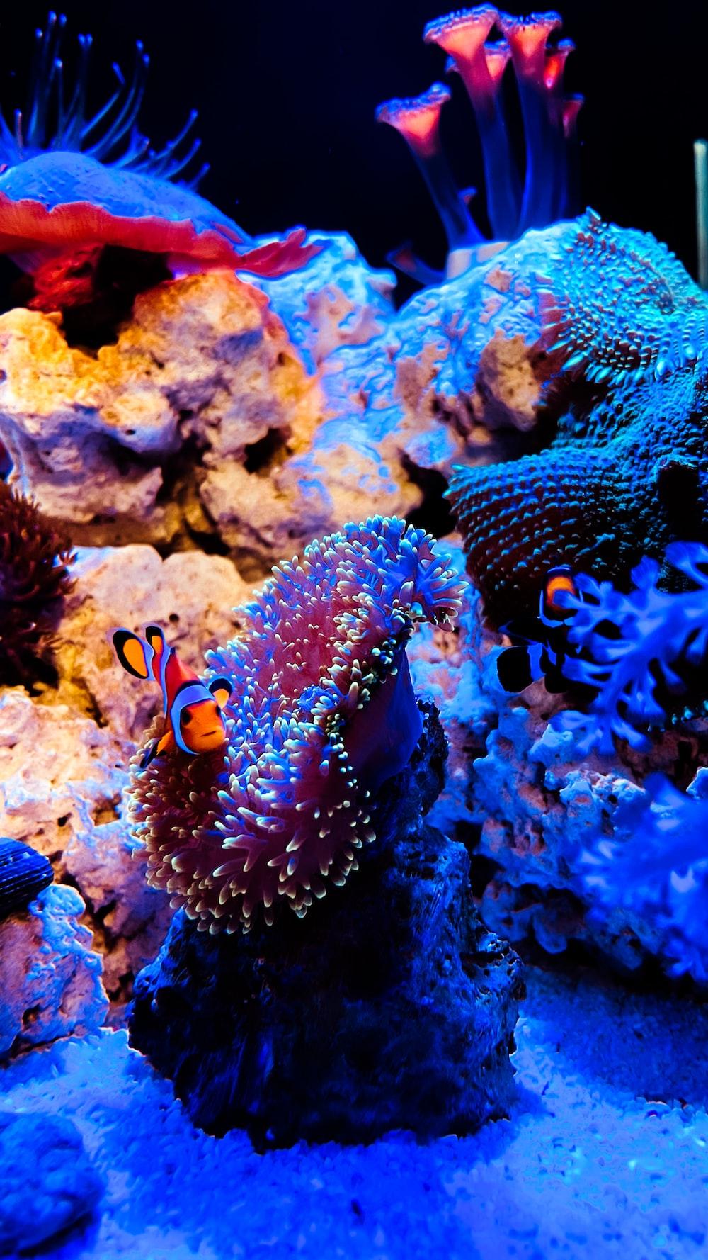 clown fish in body of water