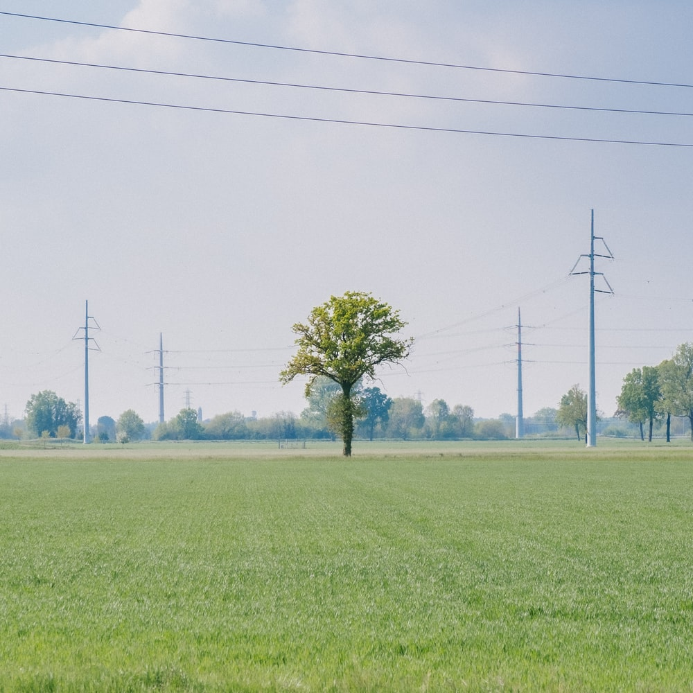 green tree on green grass field under white sky during daytime