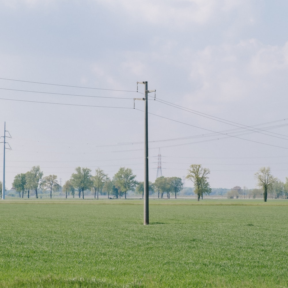 green grass field with trees under white sky during daytime