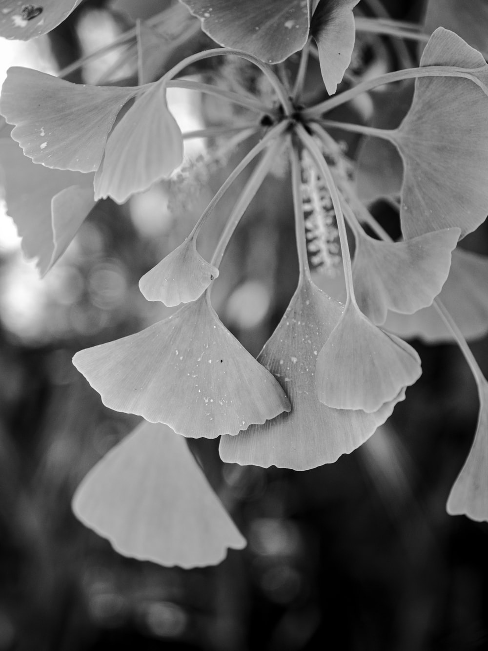 grayscale photo of flower with water droplets