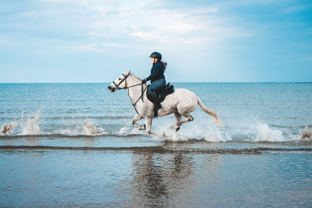 man in black jacket riding white horse on water during daytime