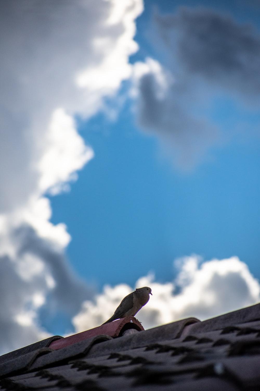 brown bird on brown wooden stick under blue sky during daytime