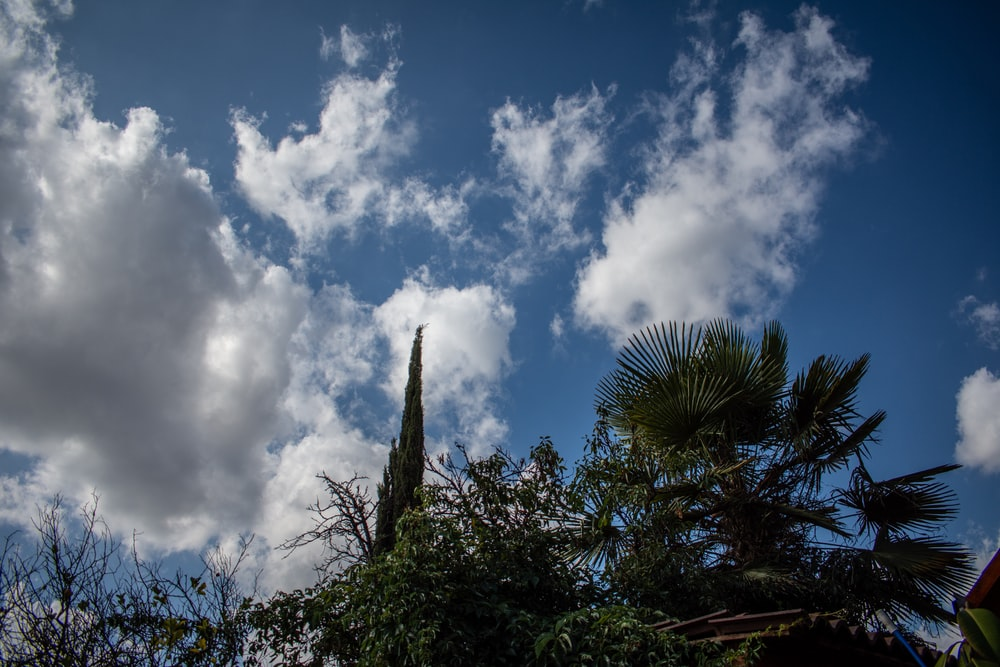 green palm tree under blue sky and white clouds during daytime