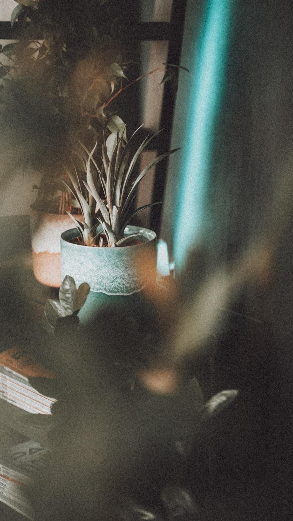 green snake plant in white ceramic pot