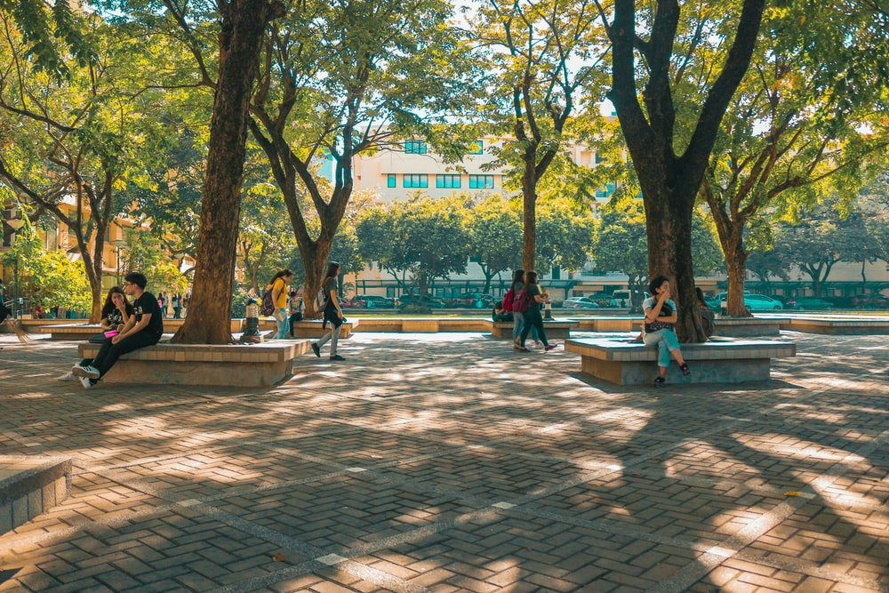 people sitting on bench near trees during daytime