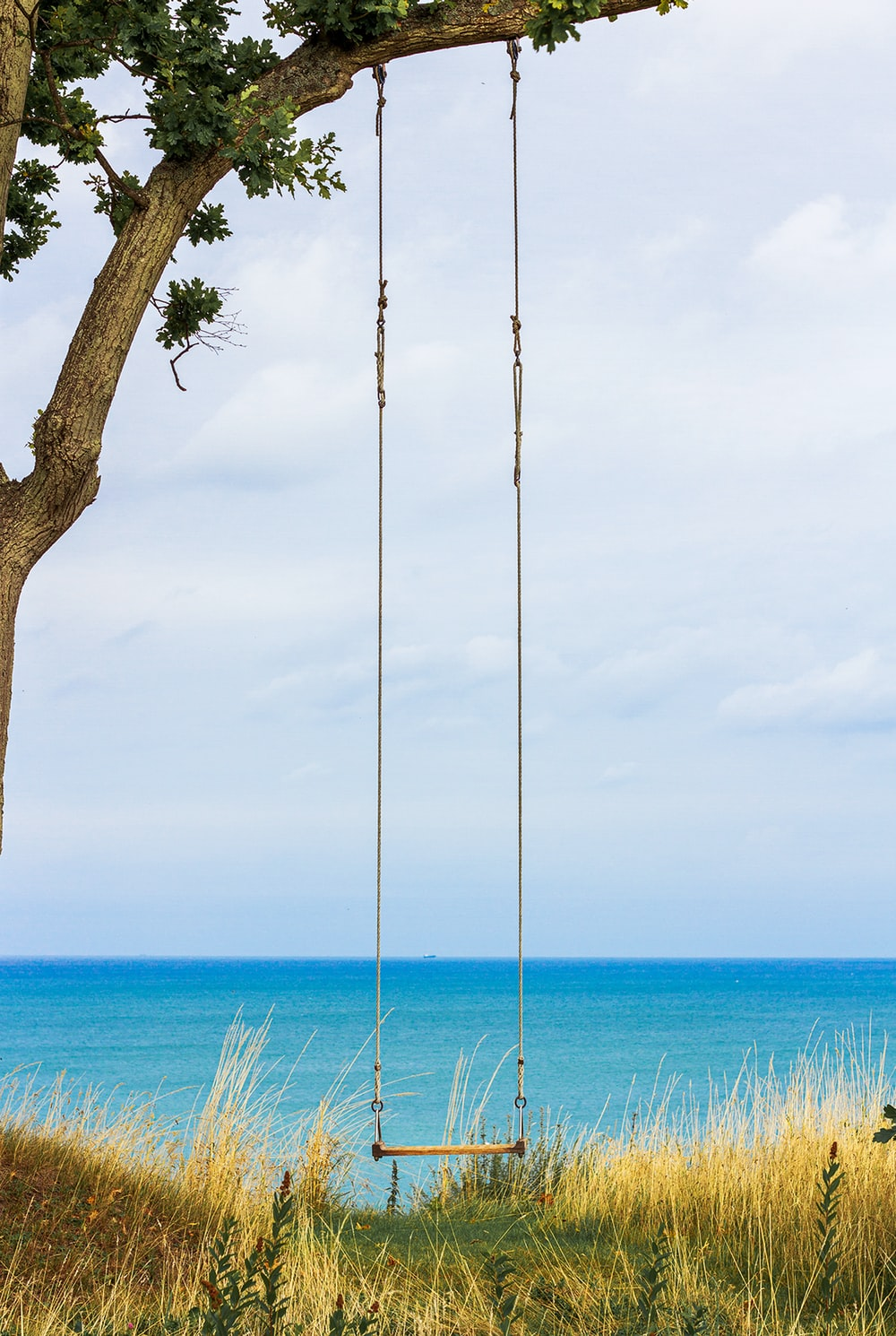 brown wooden swing on tree trunk near sea during daytime