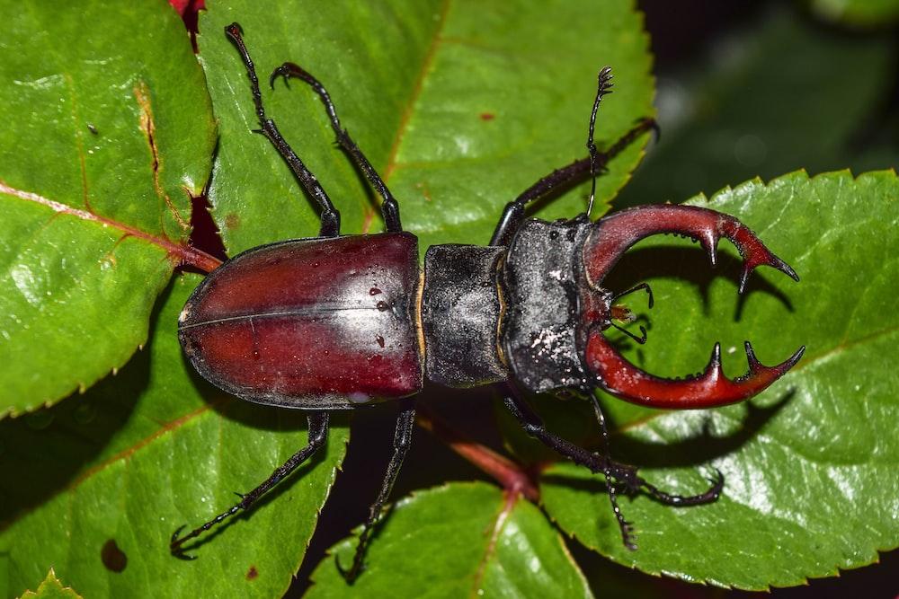 brown beetle on green leaf