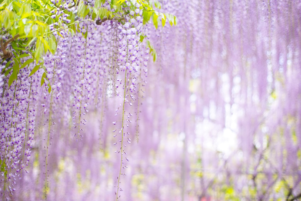 purple flowers in forest during daytime