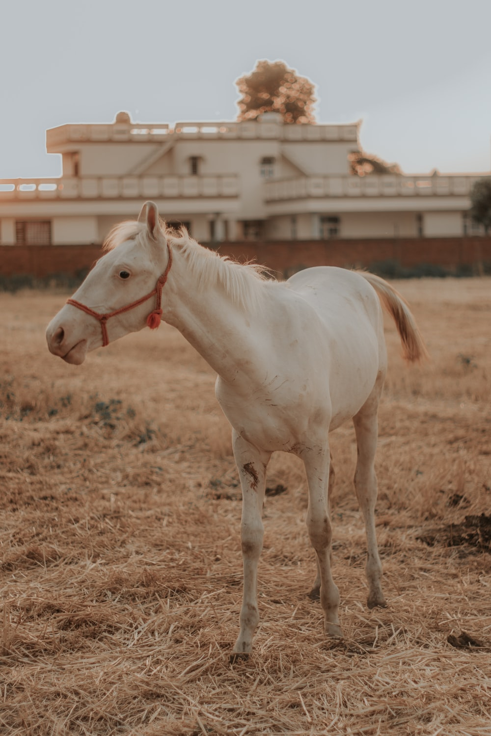 white horse on brown field during daytime