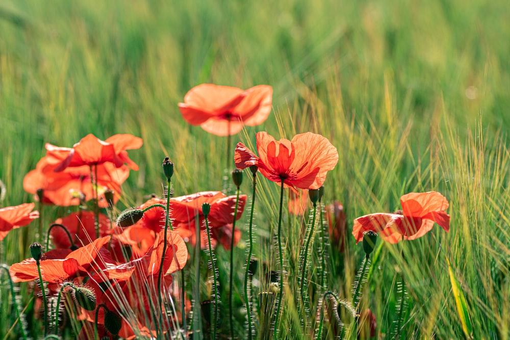 orange flower in green grass field during daytime