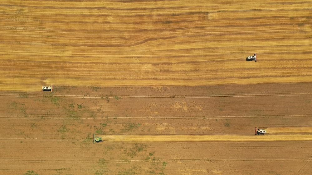 green grass on brown wooden floor