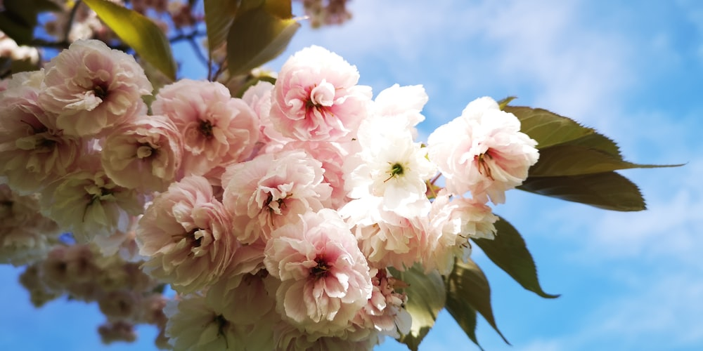 white and pink flowers during daytime