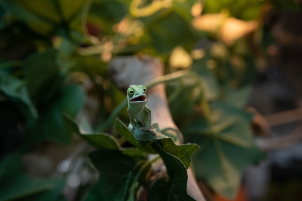 green frog on green plant