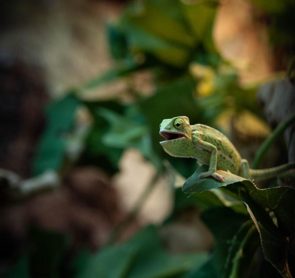green frog on green stem