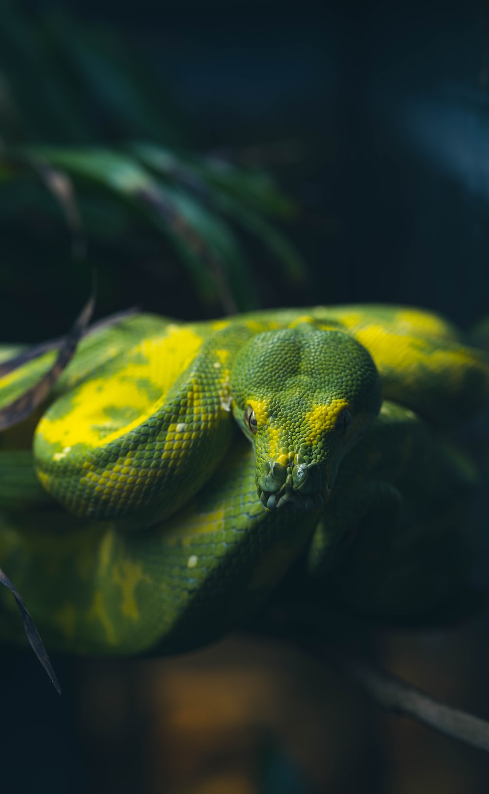 green and white snake on brown tree branch