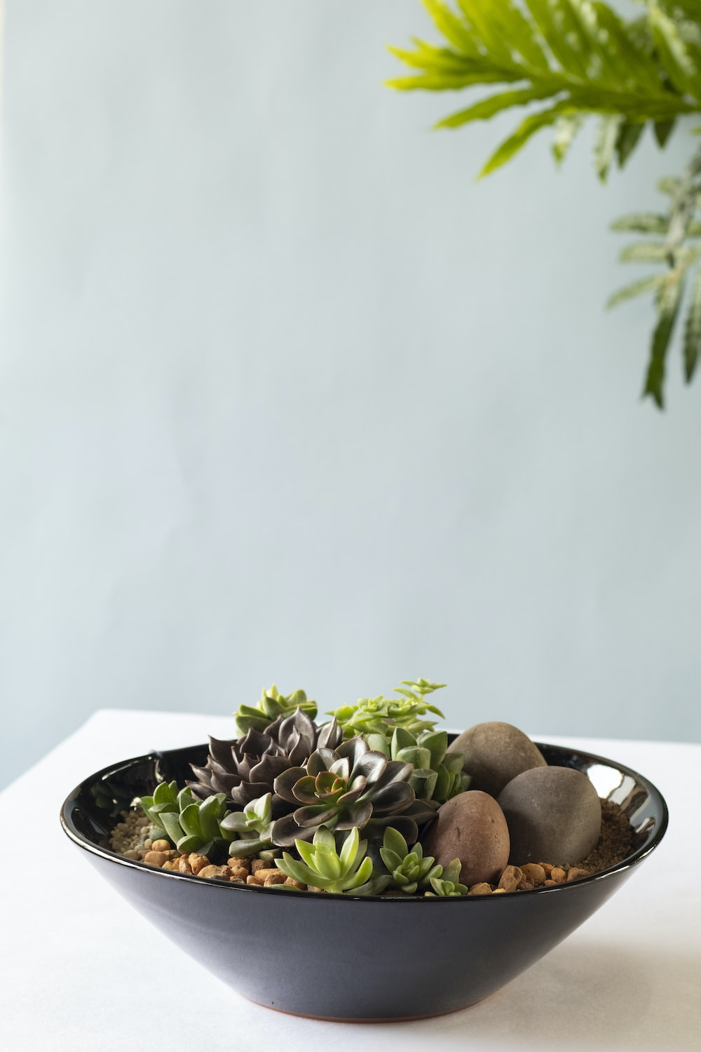 brown and black round fruits on white ceramic plate
