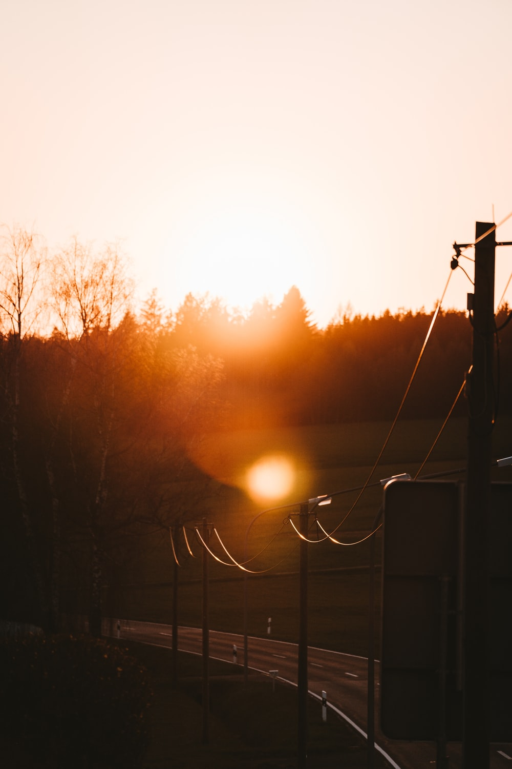 sun setting over trees and electric post