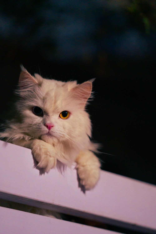white cat on black surface