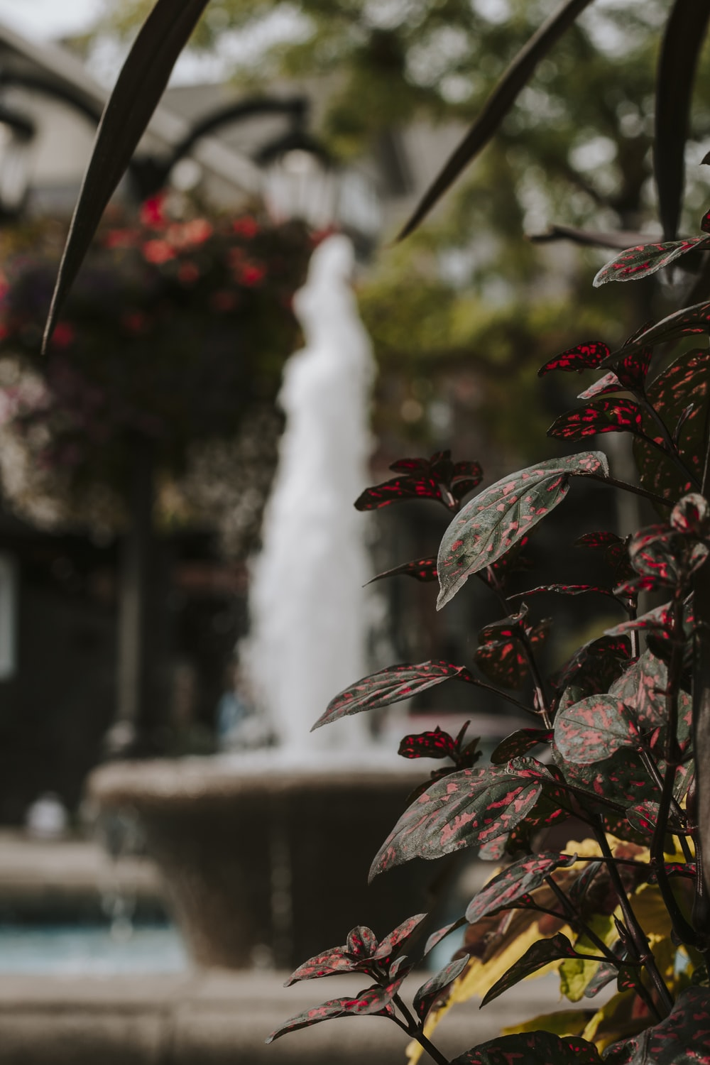 red and green leaves with water fountain in the distance