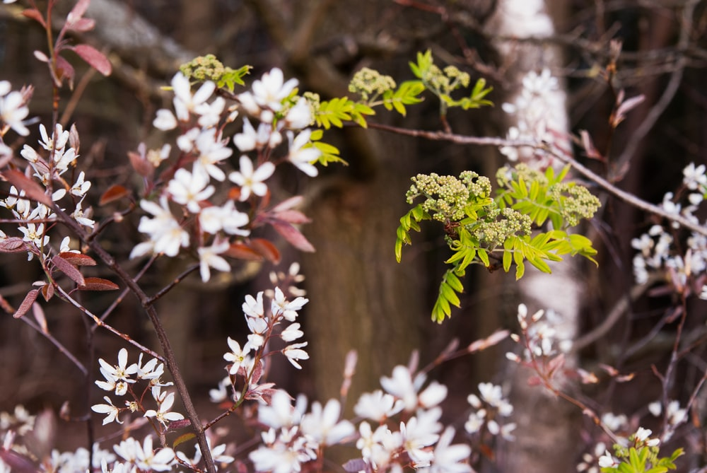 white flowers on brown tree branch