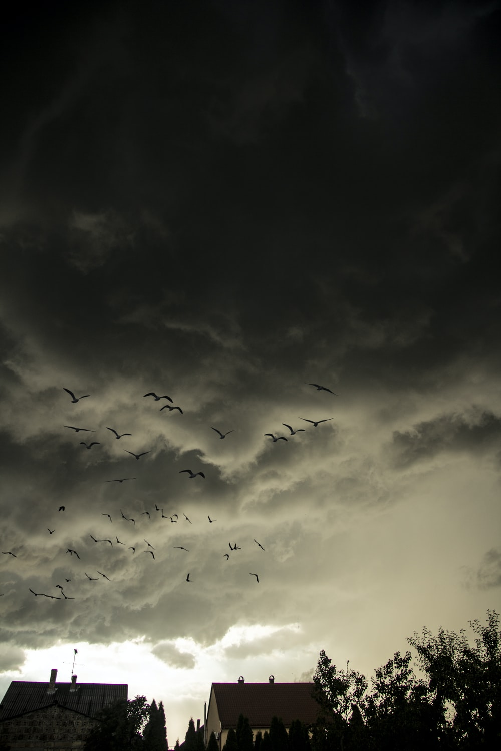 flock of birds flying under cloudy sky during daytime