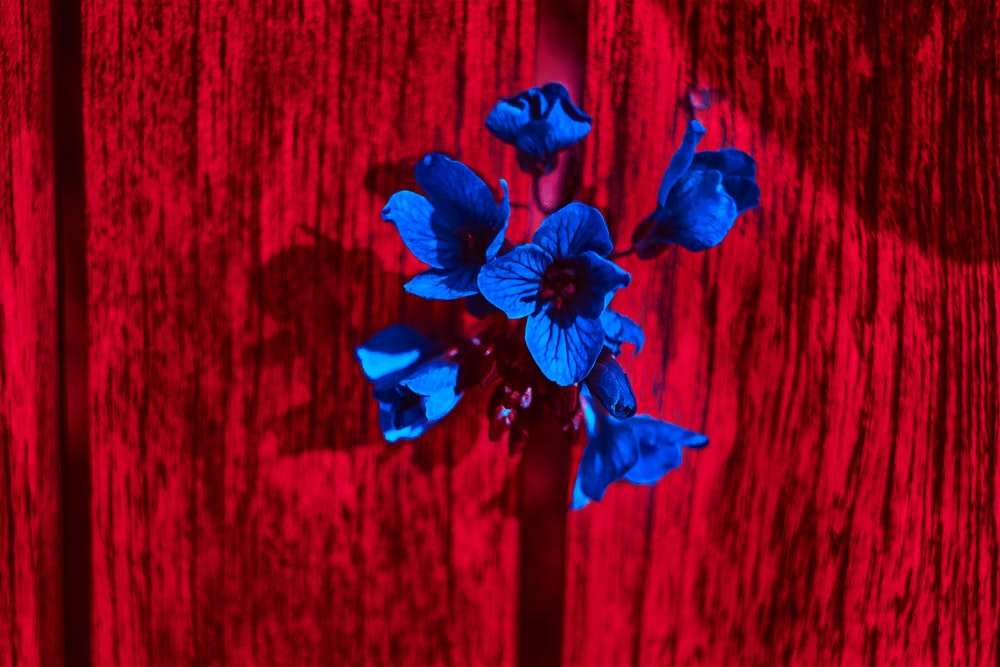 blue flower on red wooden surface